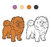 Coloring book, Dog breeds: Chow chow Stock Photography