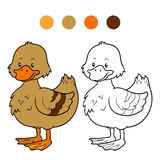Coloring book (duck) Royalty Free Stock Image
