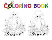Coloring Book Easter chicks in broken eggshell Stock Photos