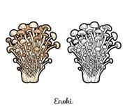 Coloring book. Edible mushrooms, enoki Stock Image