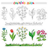 Coloring book with flower set . Vector illustration. Stock Image
