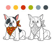 Coloring book (french bulldog) Stock Images