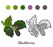 Coloring book: fruits and vegetables (blackberries) Stock Image
