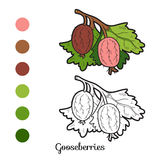 Coloring book: fruits and vegetables (gooseberries) Stock Images