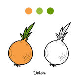 Coloring book: fruits and vegetables (onion) Stock Photography