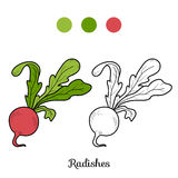 Coloring book: fruits and vegetables (radishes) Royalty Free Stock Photo