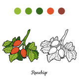 Coloring book: fruits and vegetables (rosehips) Royalty Free Stock Photos