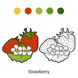 Coloring book: fruits and vegetables (strawberry) Stock Photos