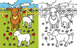 Coloring book goat. Colors and black and white version of a happy goats family, for a coloring book Stock Image