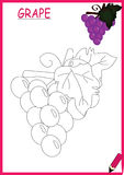 Coloring book-grape Royalty Free Stock Photo