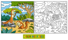 Coloring book (ground squirrel, xerus) Royalty Free Stock Photos