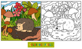 Coloring book (hedgehog) Stock Images