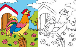 Coloring book hen rooster. Colors and black and white version of a colorful rooster for a coloring book Royalty Free Stock Images