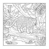 Coloring book (jaguar), illustration (letter J) Stock Photo