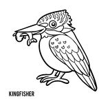 Coloring book, Kingfisher. Coloring book for children, Kingfisher Royalty Free Stock Image