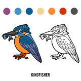 Coloring book, Kingfisher. Coloring book for children, Kingfisher Stock Photo