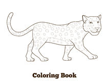 Coloring book leopard african savannah animal Stock Image