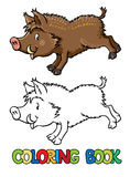Coloring book of little funny boar or wild pig Stock Photos