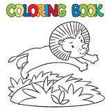 Coloring book of little lion Stock Image