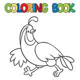 Coloring book of little quail Royalty Free Stock Images