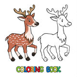 Coloring book of lttle funny young deer or fawn Stock Photography
