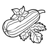 Coloring book, Marrow squash. Coloring book for children, Marrow squash Royalty Free Stock Photography