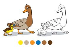 Free Coloring Book. Mother Duck And Duckling Stock Images - 148761274