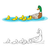 Coloring Book. Mother Duck And Ducklings. Stock Photo