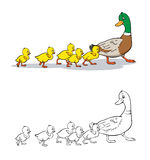 Coloring book. Mother duck and ducklings. Royalty Free Stock Photo