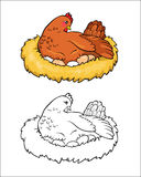 Coloring book. Mother hen incubates the eggs. Royalty Free Stock Photos