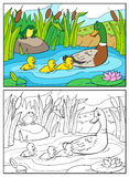 Coloring book. Mother duck and ducklings. Stock Photography
