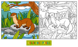 Coloring book (otter and background) Royalty Free Stock Image
