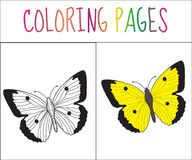 Coloring book page. Butterfly. Sketch and color version. Coloring for kids. Vector illustration.  stock illustration