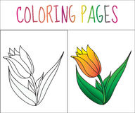 Coloring book page, flower, tulip. Sketch and color version. Coloring for kids. Vector illustration.  royalty free illustration