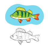 Coloring book or page, illustration with fish perch. Stock Images