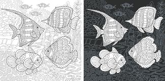 Coloring book page with tropical fishes. Coloring Page. Coloring Book. Colouring picture with tropical fishes drawn in zentangle style. Antistress freehand vector illustration