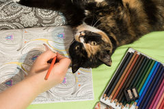 Coloring book, pencils, hand and a cat. Royalty Free Stock Photo