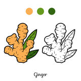 Coloring book, plant Ginger Stock Photography