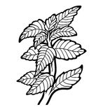Coloring book, plant, Mint Royalty Free Stock Photography