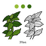 Coloring book, plant, Mint Stock Photo