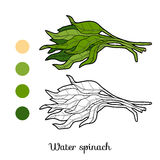Coloring book, plant Water spinach Stock Photography