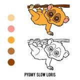 Coloring book, Pygmy slow loris Stock Image