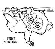 Coloring book, Pygmy slow loris Stock Photography