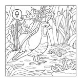 Coloring book (quail), colorless illustration (letter Q) Royalty Free Stock Photography