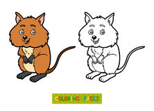 Coloring book, Quokka Royalty Free Stock Images