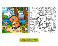 Coloring book, Quokka Royalty Free Stock Photography
