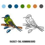 Coloring book, Racket-tail Hummingbird Stock Photo