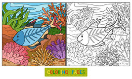 Coloring book (x-ray fish). Coloring book for children (x-ray fish Stock Photos