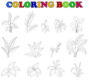 Coloring book of set tropical plant Stock Photography