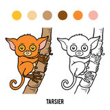 Coloring book, Tarsier. Coloring book for children, Tarsier stock illustration